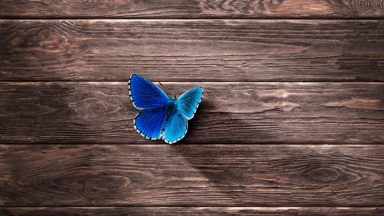 butterfly, surface, wooden