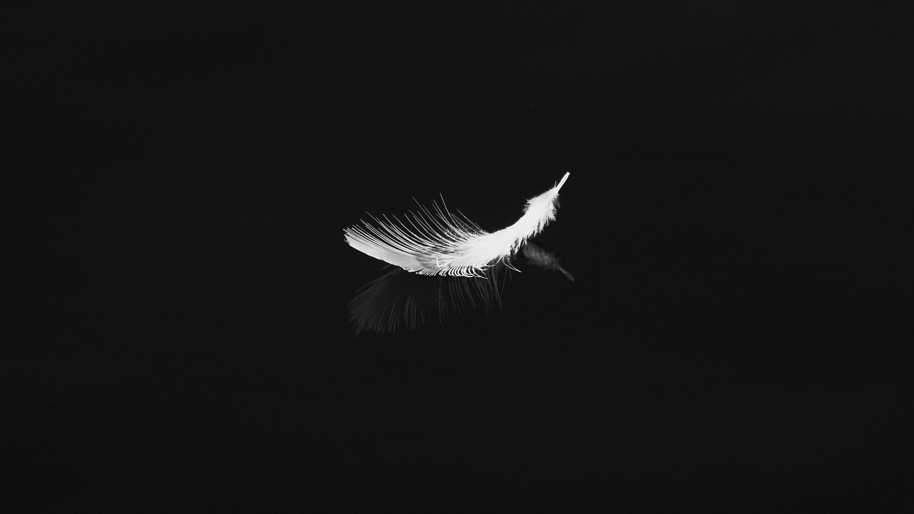 feather, reflection, white, bw, feathers