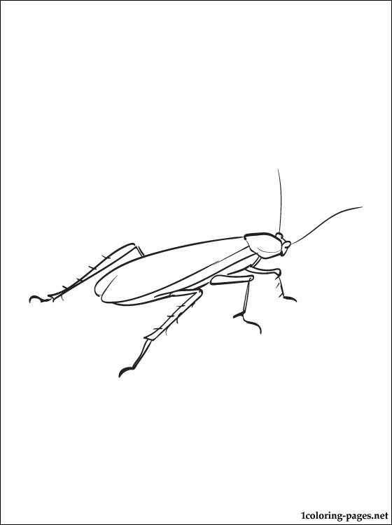 Cockroach Coloring Pages